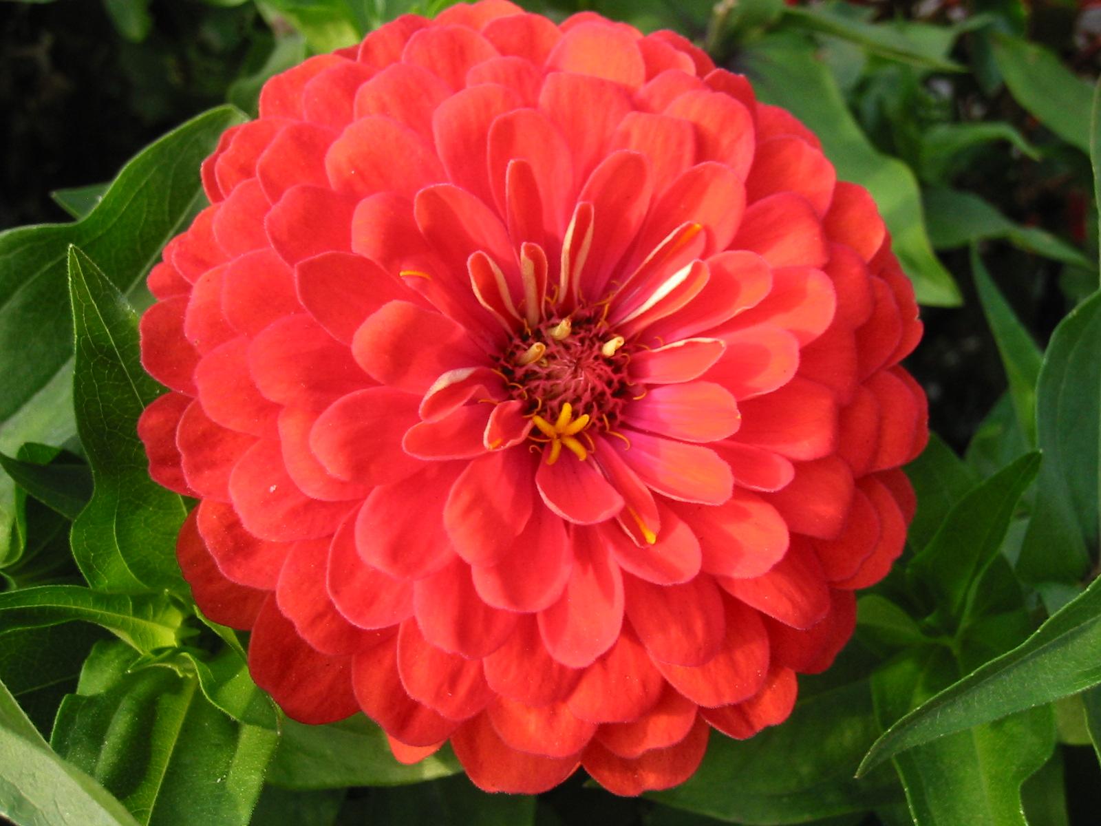 Каким цветом покрасить садовый домик фото збруев начался