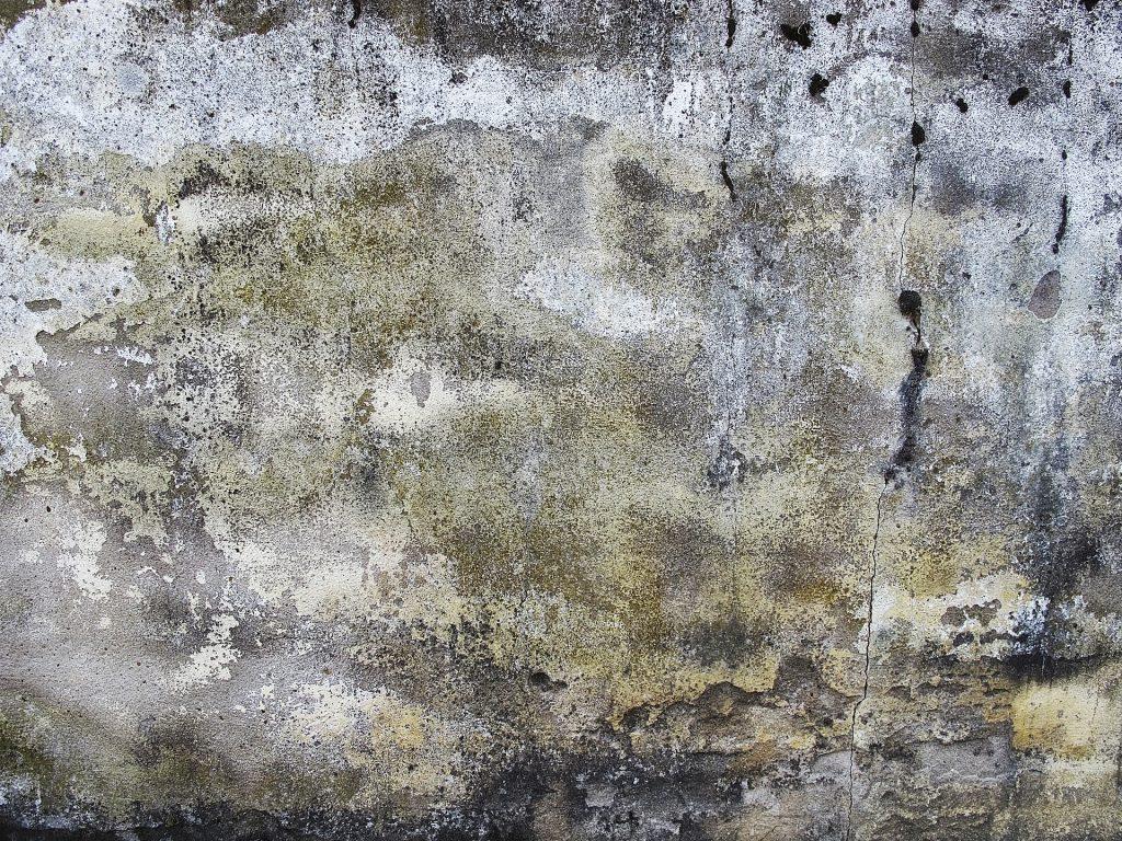 Kako očistiti buđ sa zidova u stanu